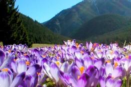 Pakiety zakopane wiosna w Tatrach