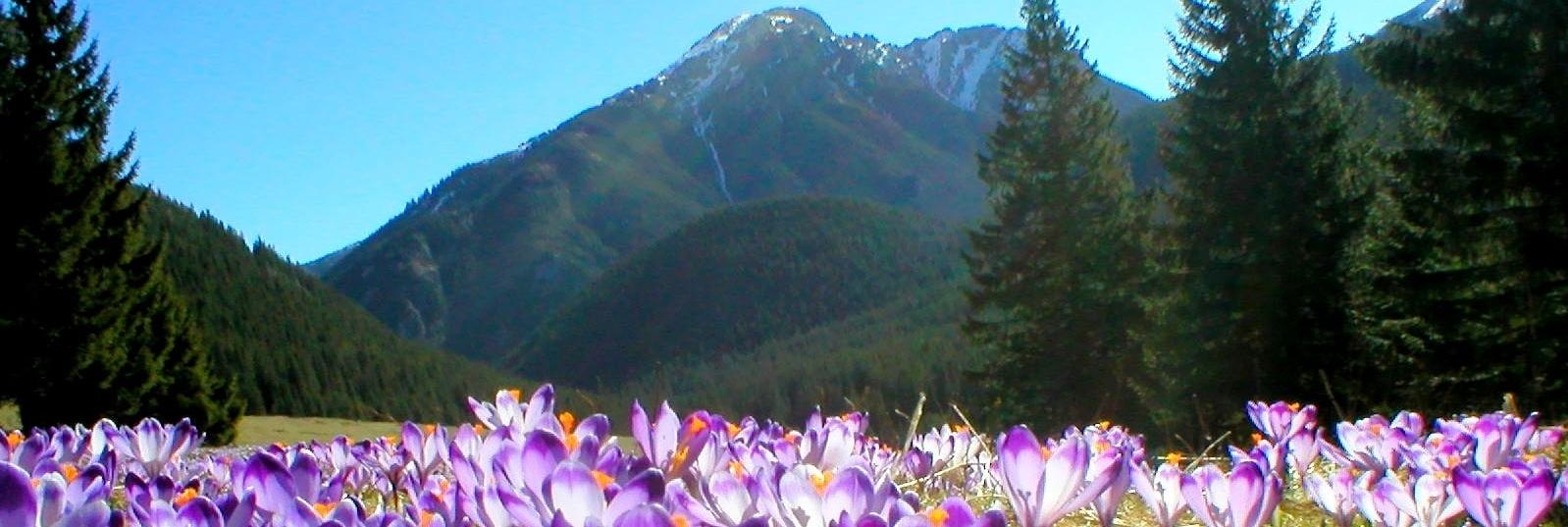 Wiosna weekend Zakopane